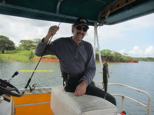 #Gatun lake has the best #peacock #bass #fishing in the world.  Neil, co-owner of Panama Roadrunner often takes groups out and they will catch between 30 and 90 fish in just a few hours.