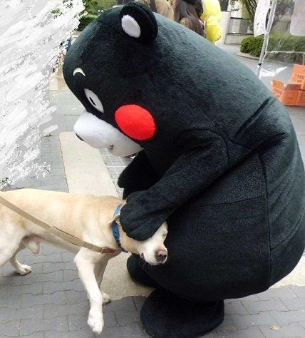 くまモンと犬