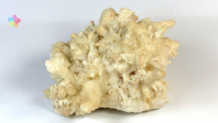 Aragonit- ładny kształt - wykwity w postaci kwiat żelaza. (var Eisenblüte) Pochodzenie: Villamassargia, Iglesiente, Sardynia, Włochy Wymiary: 10.5  x  8.5 x 7.0 cm Waga: 468 g Wzór chemiczny: CaCO3, czasem występują domieszki Pb, Sr, Zn