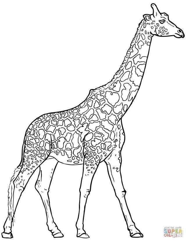 21 Exclusive Picture Of Giraffe Coloring Pages Giraffe Coloring