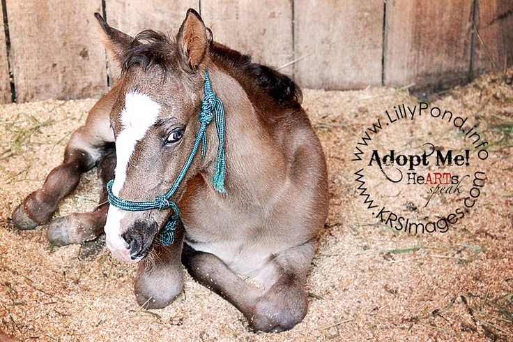 Thumper is an orphaned nurse mare foal who is looking for his forever home!!  For more information, please visit Lilly Pond Foal Rescue at http://www.lillypond.info (Dunkirk, MD)