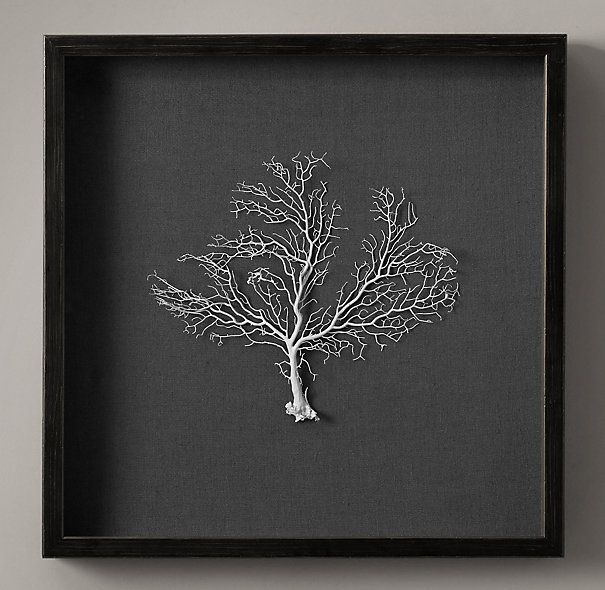 """Restoration Hardware - Preserved Sea Fan with Grey Mat 22""""X22"""" $395 Sea fans grow their lacy fronds as they wave in warm, shallow waters of the West Indies, the Bahamas and other exotic locales. The graceful, delicate filigrees of our genuine sea fans become natural works of art in our one-of-a-kind framed editions.     22"""" sq."""
