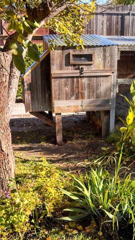 how to build a hen house out of pallets woodworking