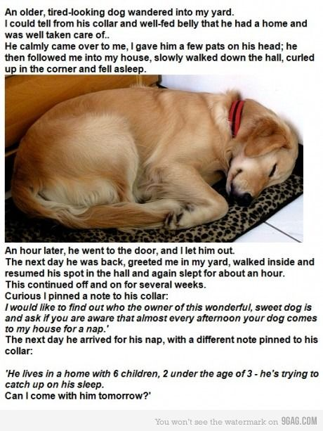 THE DOG: Sleep Dogs, Smart Dogs, Old Dogs, Funny Stories, Funny Stuff, Naps Time, Cute Stories, Dogs Stories, So Sweet