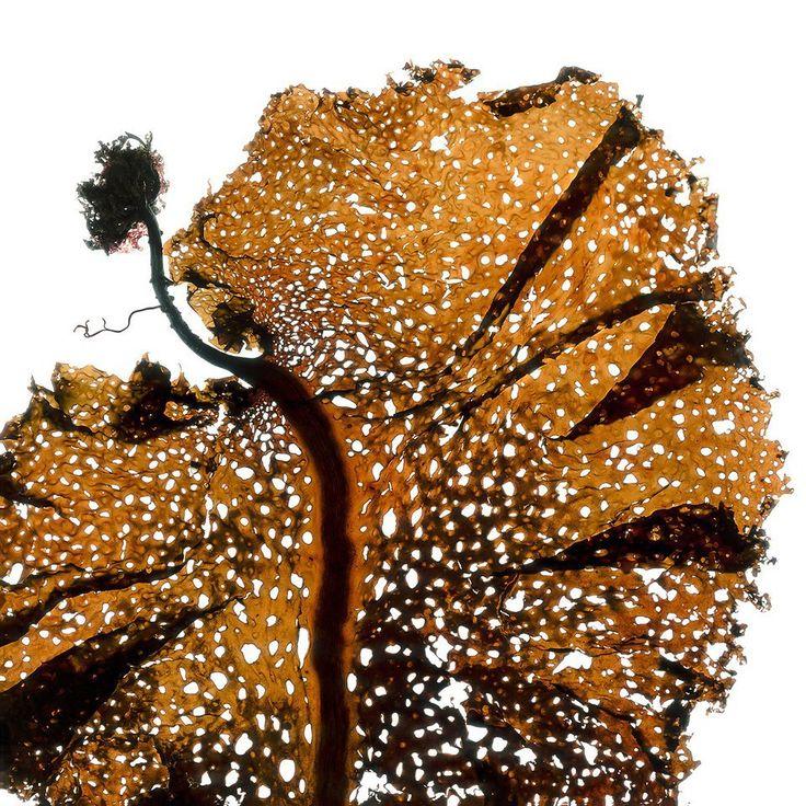 http://www.lookatme.ru/mag/live/experience-reports/206161-seaweed
