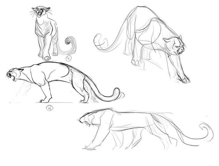 Cougar Concepts_2 by ~davidsdoodles on deviantART