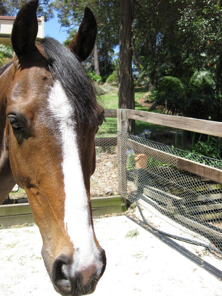 Byalee Bonbon, Australian Riding Pony
