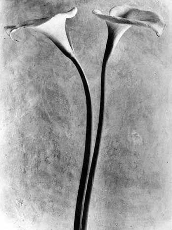 Calla Lilies  - Tina Modotti, 1924