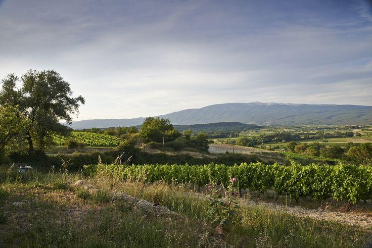 Domaine du Grand Vallat - Mont Ventoux