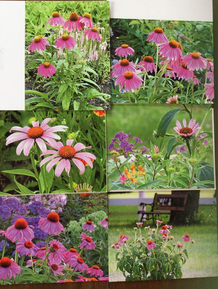 Pin by Ramona Bloodgood on Ramona's Backyard and Beyond