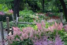 Le jardin des sous-bois au Centre de la Nature de Laval