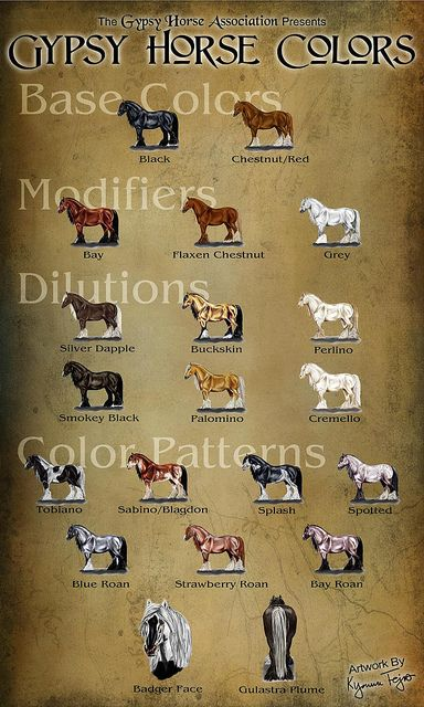 Gypsy Horse Association Color Chart  Drawings done for GHA, put together by Elizabeth Sescilla