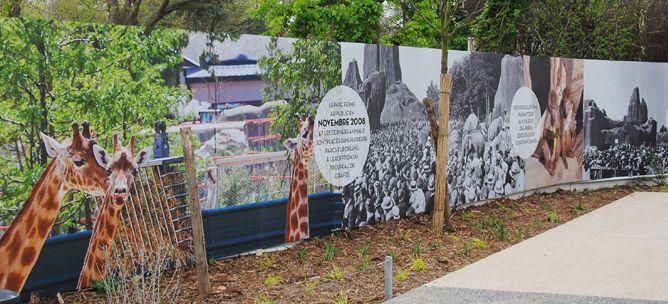Habillage de la Palissade du Zoo de Vincennes : conception graphique, production et pose des panneaux #communication #chantier #zoo