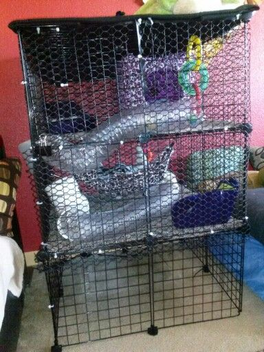 C  C Cage for my Ferret  3 Cats and a Dog  Ferret cage