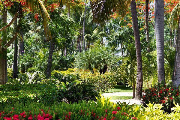 14 Холодная Харди тропических растений, чтобы создать тропический сад в холодном климате   Балкон Сад Интернет