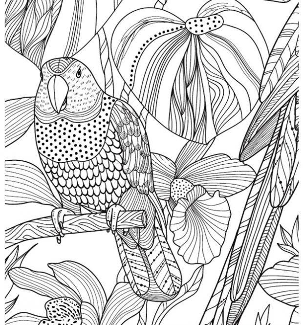 4201 zencolor ausmalvorlage papagei ausmalbuch fuer 620 665 birds coloring. Black Bedroom Furniture Sets. Home Design Ideas