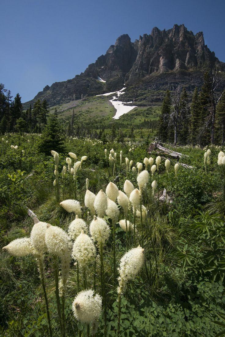 https://flic.kr/p/xzrsrj   Beargrass Path   NPS / Tim Rains   Glacier National Park, Montana   pinned by haw-creek.com