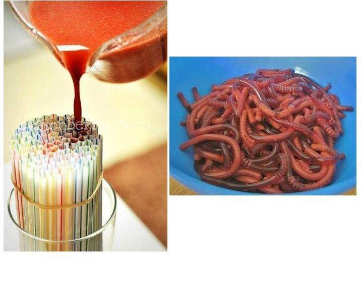 -Un paquet de gélatine, 2/3 tasse de jus, Pailles flexibles (étirer = rainures)  -Faire bouillir le jus.  - Versez un paquet de gélatine une tasse. Ajouter le jus et mélanger jusqu'à ce que la gélatine se dissout. Laisser refroidir.   Attacher les pailles avec un élastique et mettre debout dans un bol. Les remplir de mélange.   -Réfrigérer 3 heures ou jusqu'à ce que la gélatine soit ferme. Plus la gélatine est réfrigérée, plus les vers deviendront fermes.  -Extraire la gélatines des pailles.