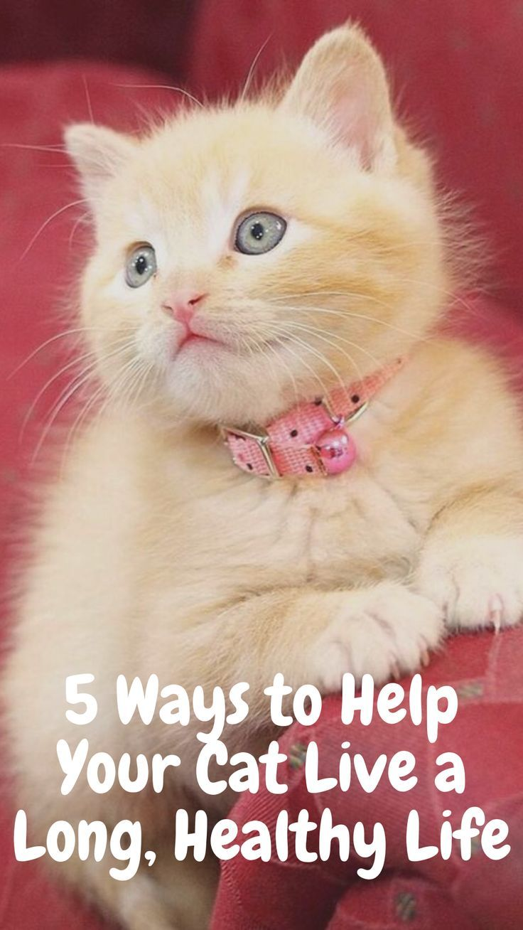 5 Ways To Help Your Cat Live Longer Cats Funny In 2020 Cats Cat Ages Funny Cats