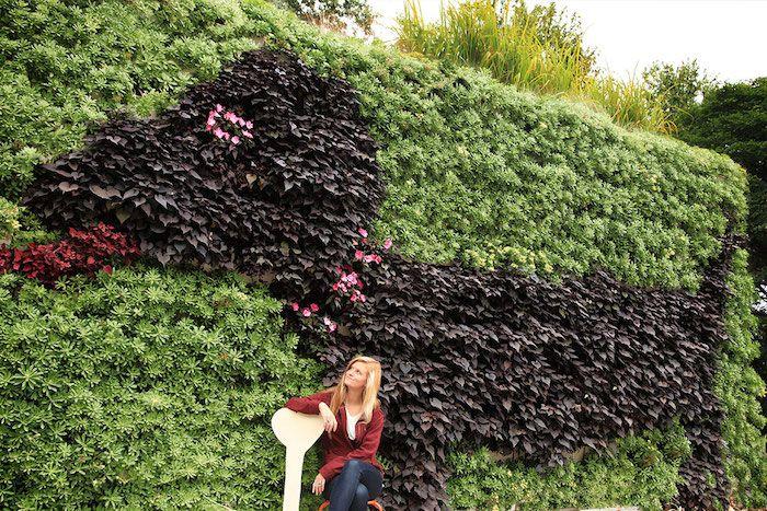 Brise Vue Vegetal Cachez Au Naturel Jardin Couvert Brise Vue