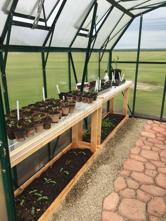 Seedlings growing inside the Grandio Elite Greenhouse.