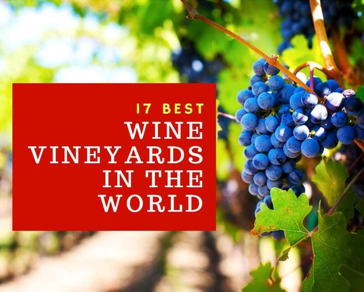 17 Best Wine Vineyards In The World Traveling and wine tasting go hand in hand, especially if you are a wine enthusiast. Wondering where to book your next adventure? Take a look at our selection of the 17 best wine vineyardsin the world!1. Barossa Valley – Australia Barossa Valley is one of the oldest and …