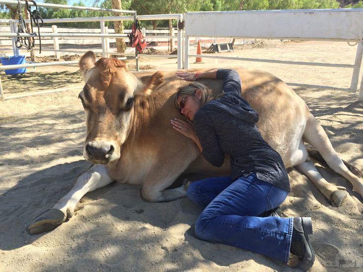 human animal bond