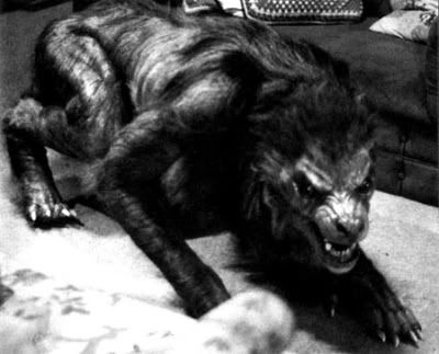 Real Sighting American Werewolf | Are Werewolfs real? Some interesing cases that suggest so. | Wolves & Werewolves | Pinterest | Werewolf, American werewolf in…