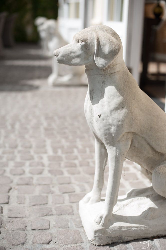 Our Manor dogs standing guard on the pool terrace {image courtesy @Abri Kruger} #decor