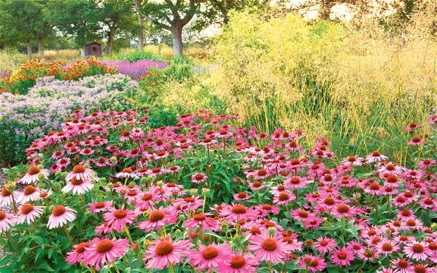 Sussex Prairies Garden: a masterclass in naturalistic-style planting - Telegraph