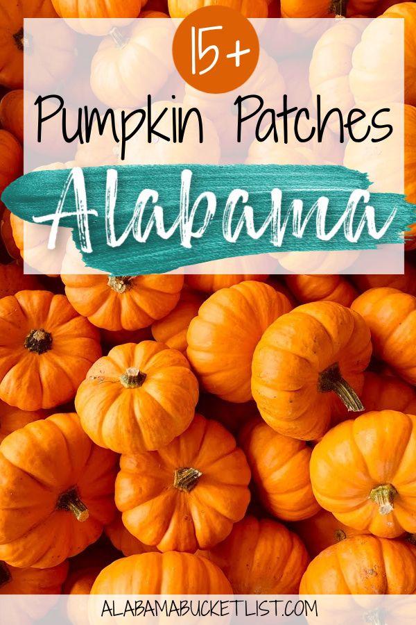 Best Pumpkin Patches In Alabama Alabama Bucket List In 2020 Best Pumpkin Patches North America Travel Destinations Fall Travel Destination