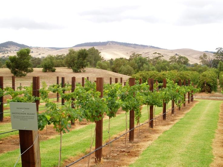 Jacob's Creek Winery, Barossa Valley, South Australia.