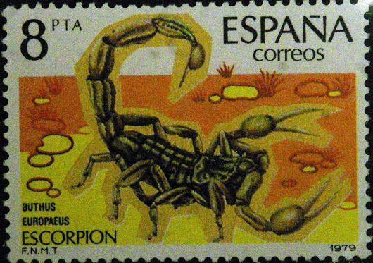 Buthus europaeus - Escorpión
