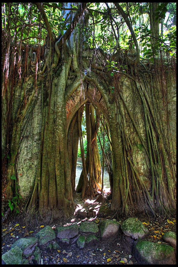 Trees & roots growing over an old stone wall and arched opening.