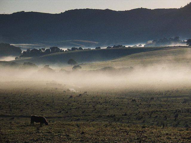 Hao Ran Lai, Dorrigo, NSW by Hao Ran Lai, via Flickr