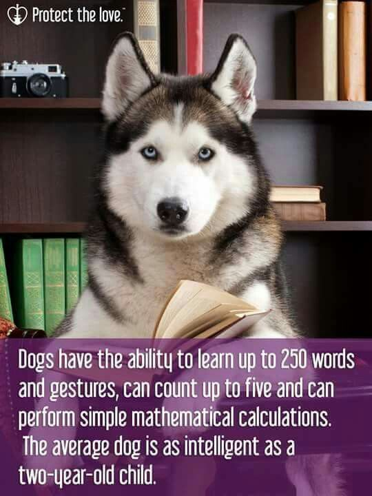 Yeah right! Do they own a siberian?