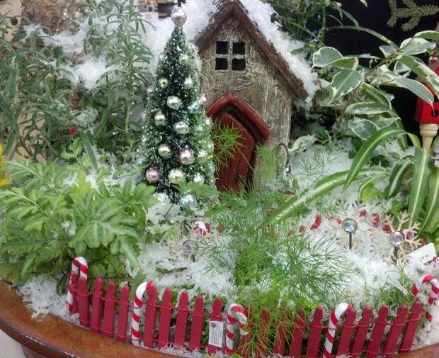 Gnome Garden: Christmas Fairy Garden Ideas - Bing Images