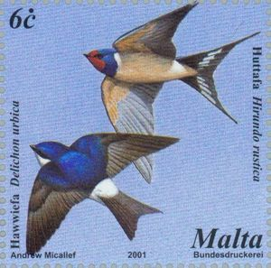 Common House Martin (Delichon urbicum), Barn Swallow (Hirund