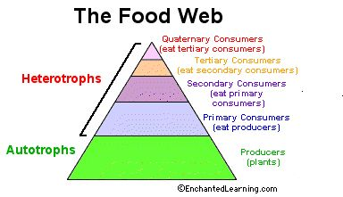1000+ images about Food chain on Pinterest | Food chains, Food webs ...
