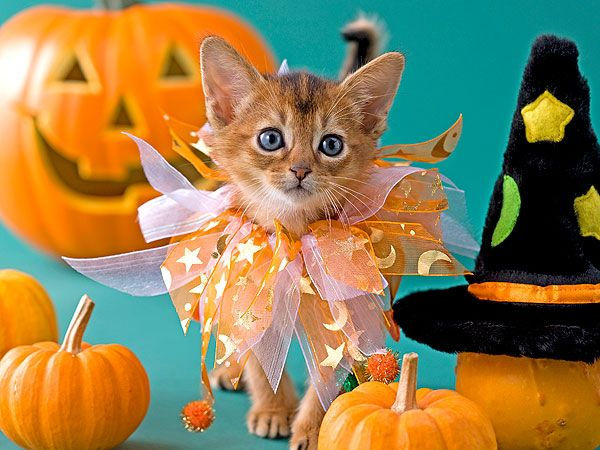 How to Dress Up Your Cat for Halloween | PEOPLE.com
