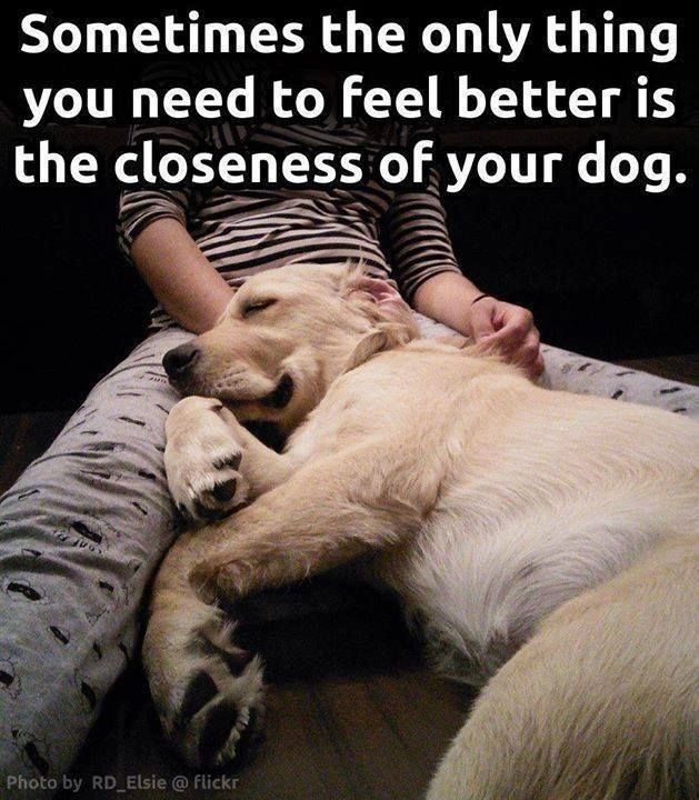Feeling down? Go snuggle your dog! (It works, we promise - check out the science on the effects of being near dogs! https://www.animalhub.com/pets-improve-health/)