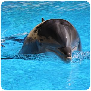 Secret Garden and Dolphin Habitat at The Mirage Hotel and Casino: Military discount $16.95/person, children 3 and under - free admission