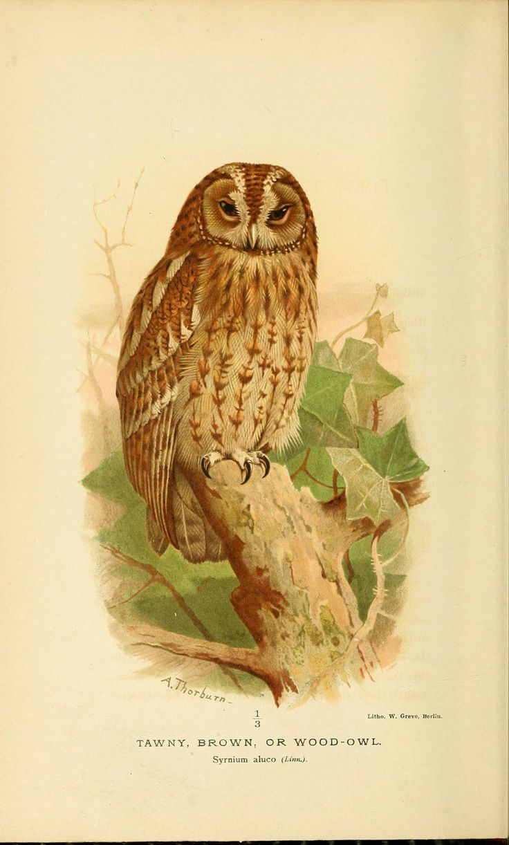 272 best birding images on pinterest bird art birds and poultry