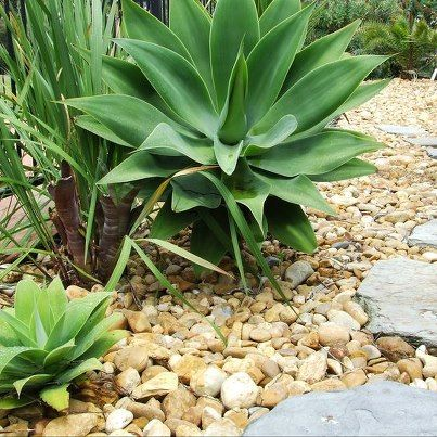 http://kennedys.net.au/pebbles/ Golden Beach pebbles of assorted sizes approx 20/40 and 30/100mm available for pick up or delivery to Cranbourne and surrounding areas