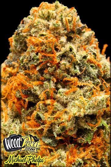 Michael Phelps Marijuana Strain Pictures