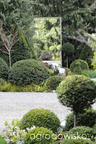 Ogród nie tylko bukszpanowy - część III - strona 512 - Forum ogrodnicze - Ogrodowisko