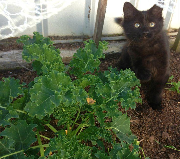 Kale keeps a watchful eye on the kale's progress