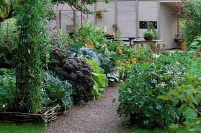 Veg garden: Gardens Ideas, Design Gardens, Gardens Design Ideas, Veg Gardens, Kitchens Gardens, Amazing Vegetables, Veggies Gardens, Vegetables Gardens Gorge, Vegetable Garden