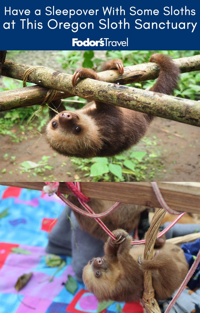 If you find yourself in Portland and are like, eh, I'm sick of all these hip cafes and bookstores and instead feel like driving an hour up north, you are in for a very special treat. #Portland #USA #America #westcoast #sloth #animals #cute