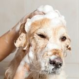 Skunk Spray & How to Remove Skunk Smell from a Dog | petMD